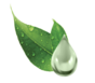 Allantoin & Aloe vera